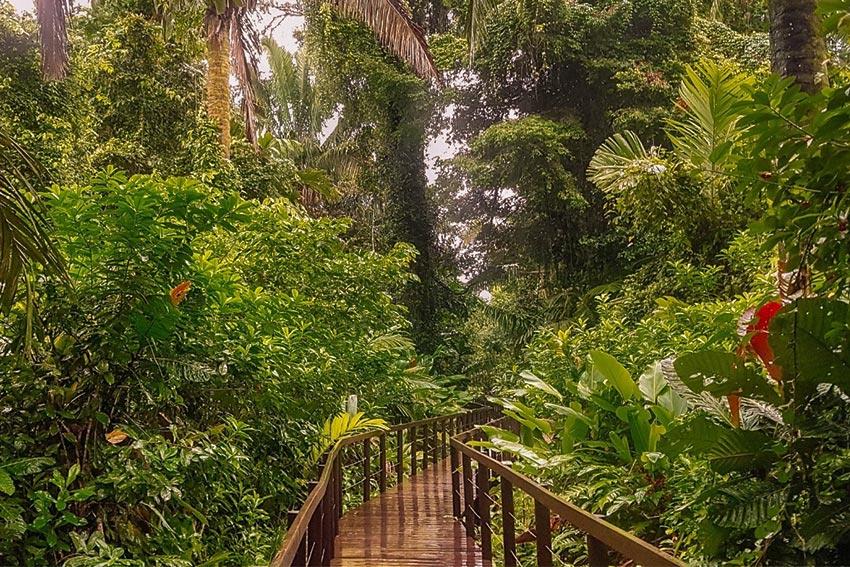 Costa Rica Rainforest Destination